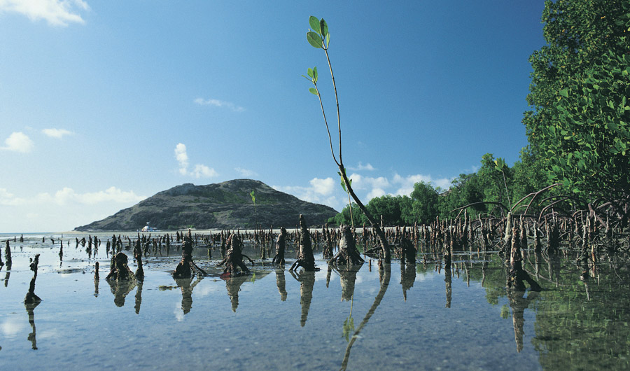 Mangroves and ecosystem
